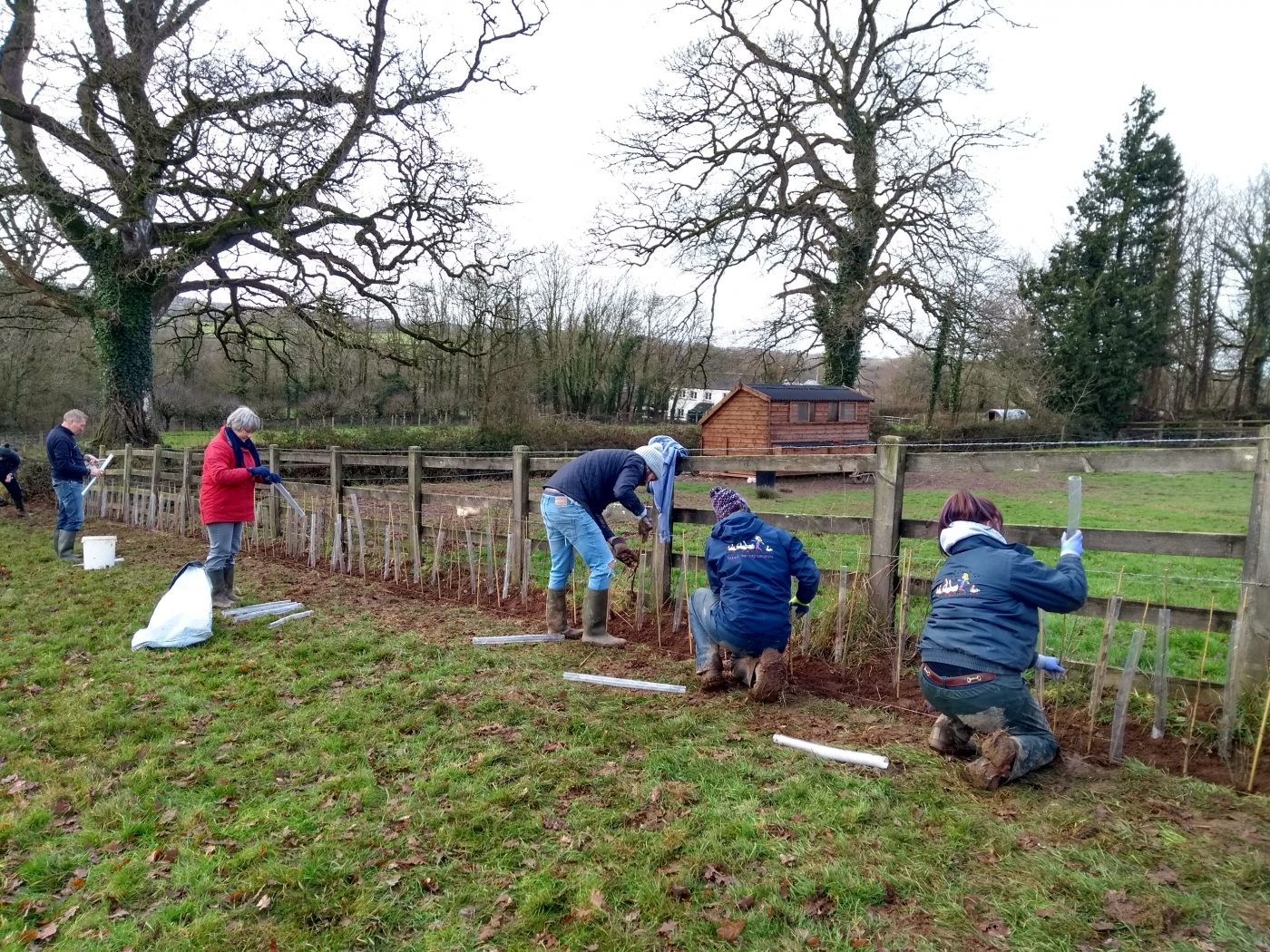 HSBC volunteers at Nethercott planting a hedge
